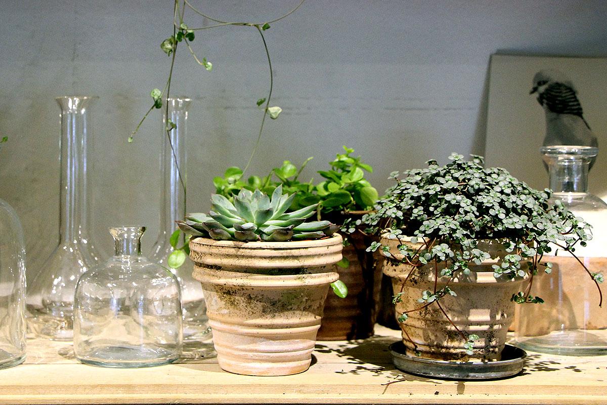 Små glasvaser och krukor blir vackra blickfång i hyllan.